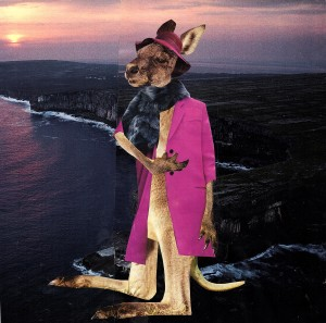sunset kangaroo