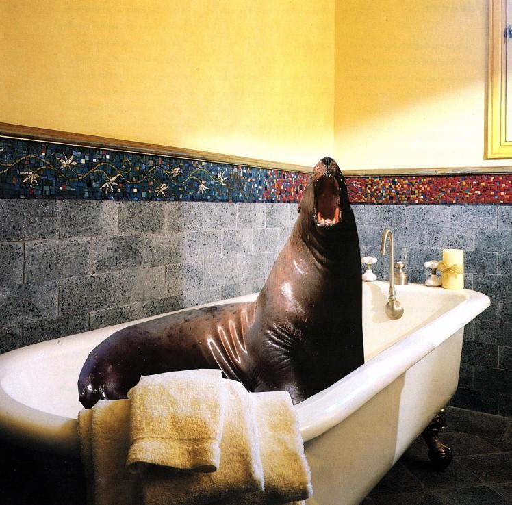seal bath
