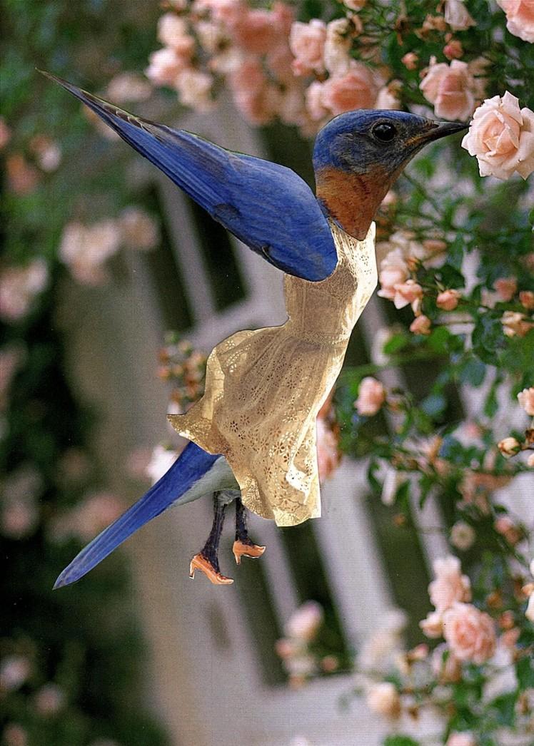 fancy hummingbird