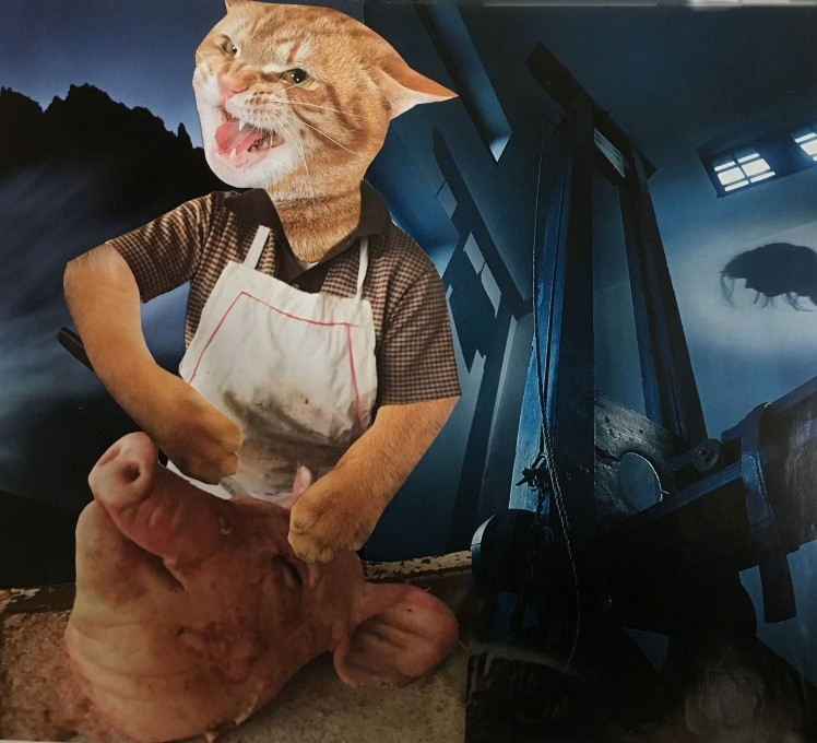 butcher cat
