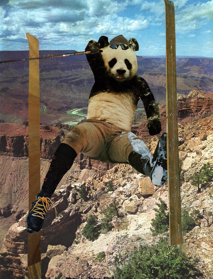 panda skiier