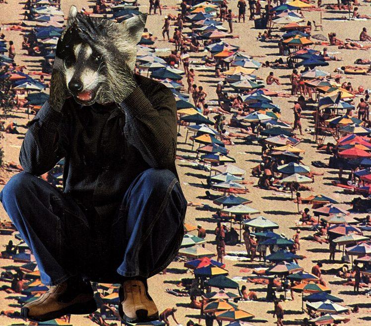 cropped-beach-raccoon.jpg