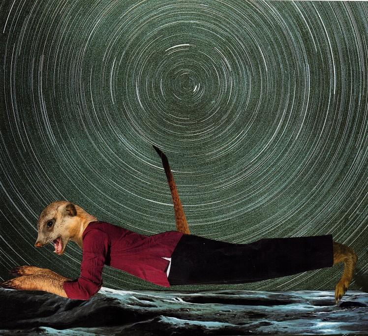 planking meerkat
